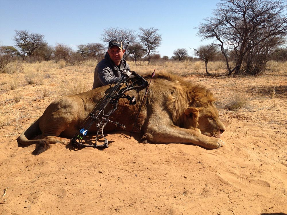 Lion in South Africa at Bushmen Safaris